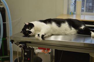 Daryl - Hospital Cat