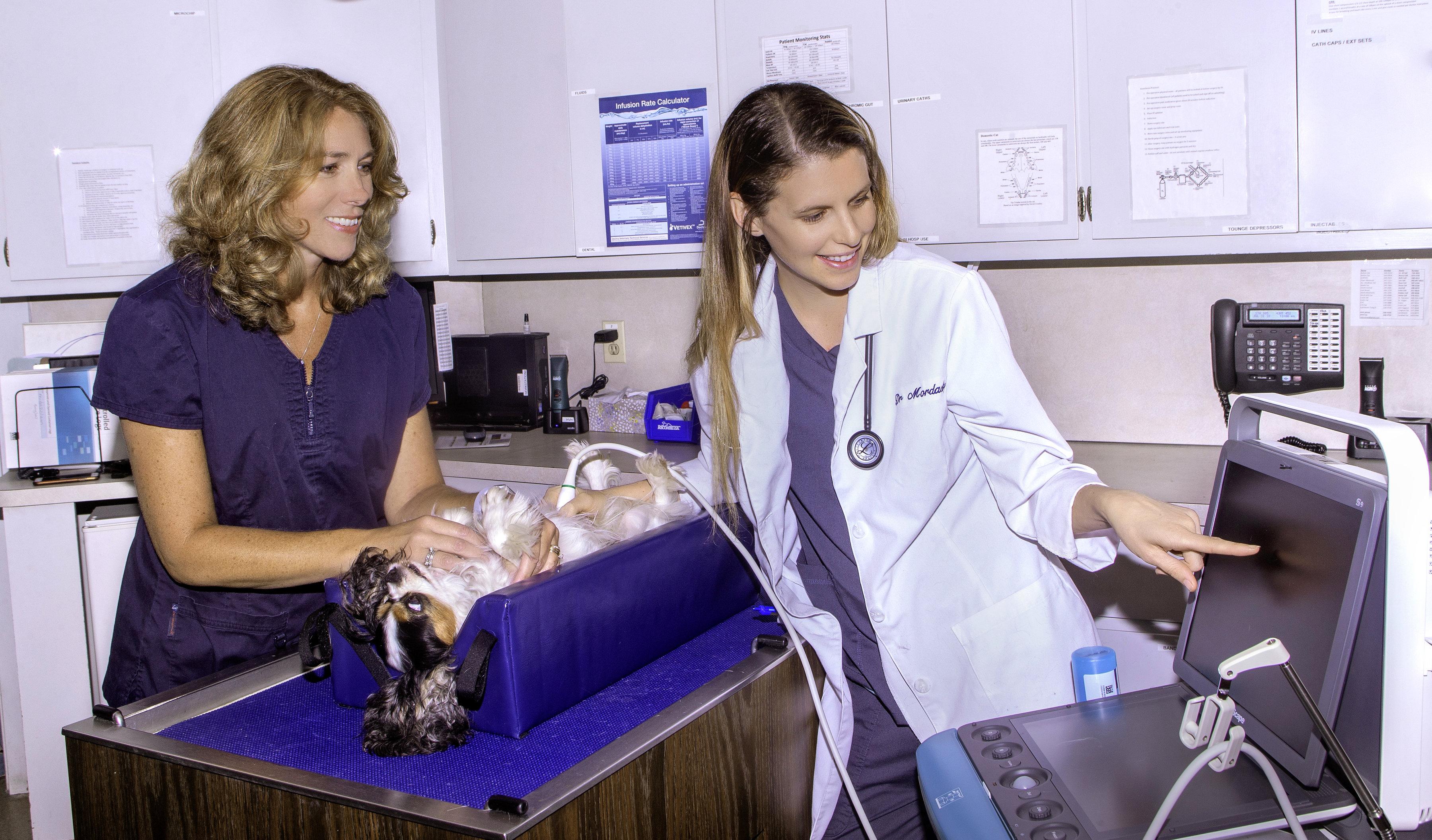 Veterinary Hospital near Lebanon CT