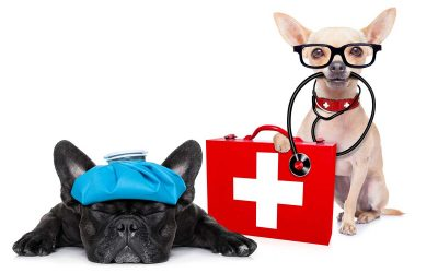 What kinds of pet conditions require emergency care?