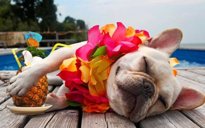 Are you ready to take your pet on vacation?