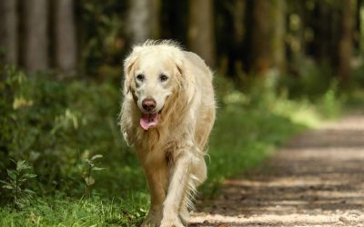What should you do if your pet runs away?