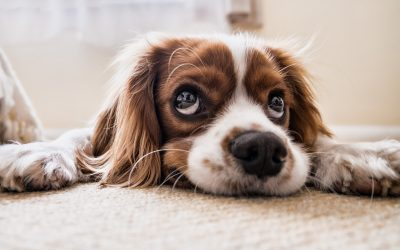 Should You be Concerned About Pet Parasites?