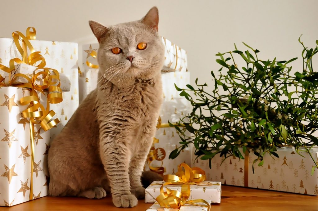 gift-for-your-pet-cat
