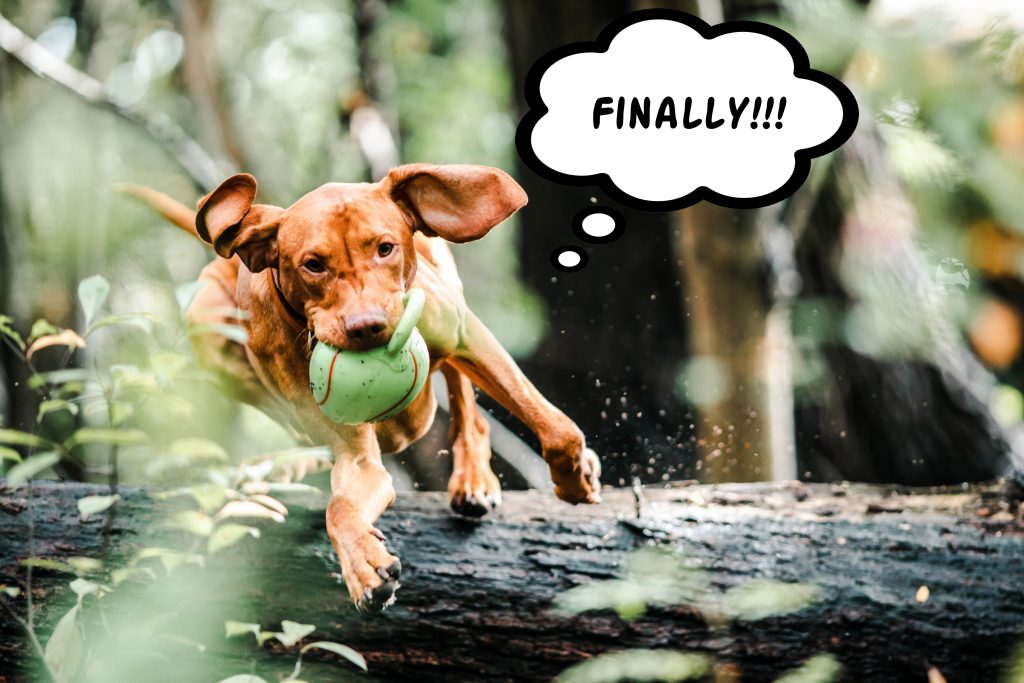 dog-with-ball-in-mouth-jumping-over-a-fallen-tree-trunk-pet-exercise