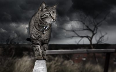 Pet Care – What will happen when disaster strikes?