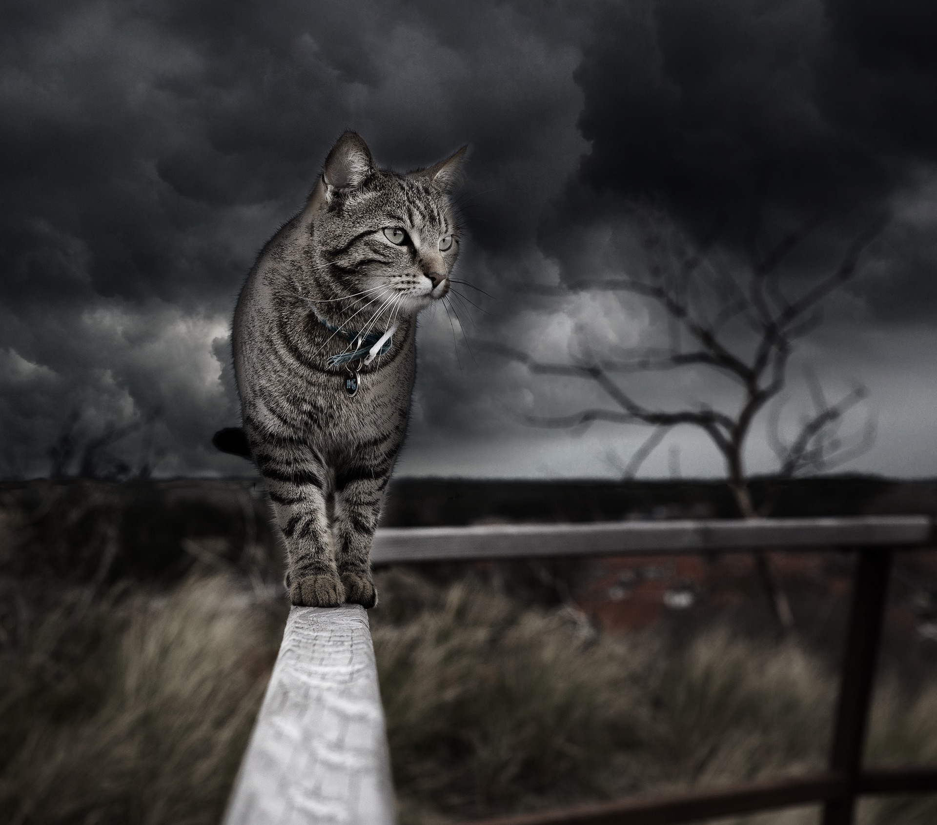 cat walking on railing, storm in background - pet care