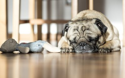 Is Your Pet Getting Enough Sleep?