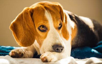 Does Your Pet Have a Skin Problem?