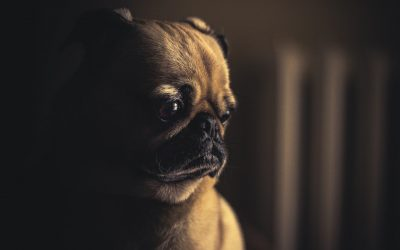 Is your pet feeling okay? How to tell if your pet is sick