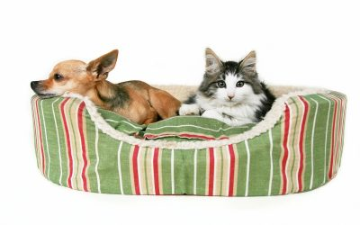 The Pros and Cons of a Pet Bed