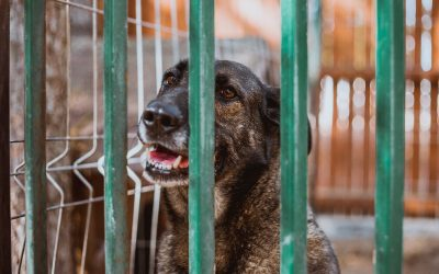 Rescue pet vet care – What Preventative Measures Should You Take?