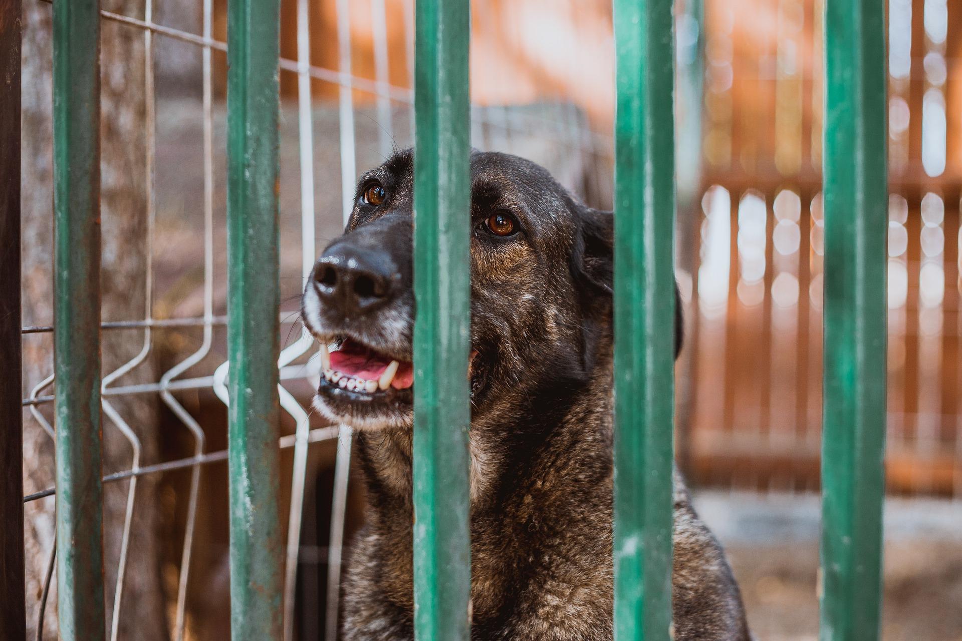 Rescue pet vet care