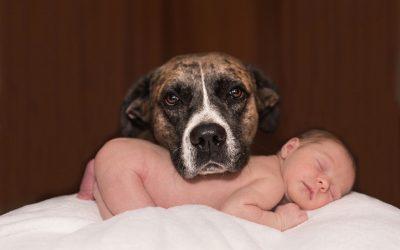 Will my newborn child be safe around my dog?