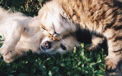 Does my pet need a pet friend?